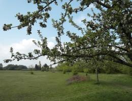 Streuobstwiese an der Angerlohe - naturOrte.de