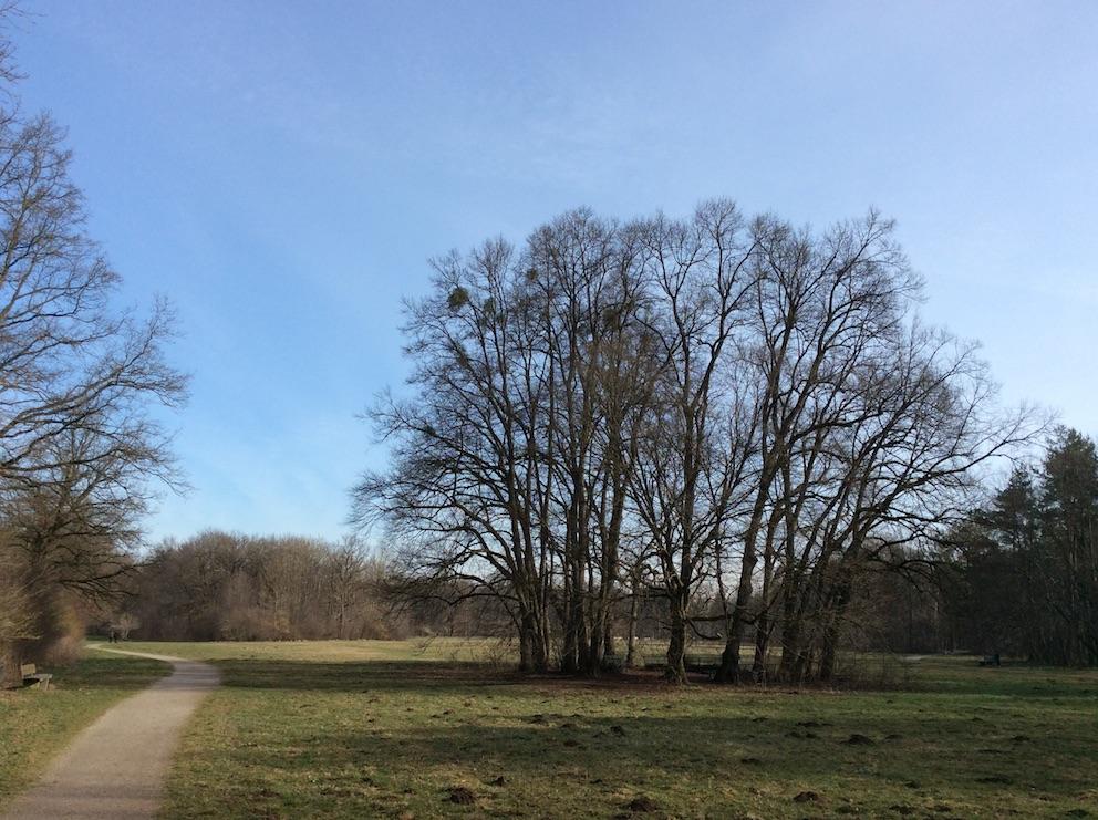 Wiese am Hartmannshofer Park - naturOrte.de