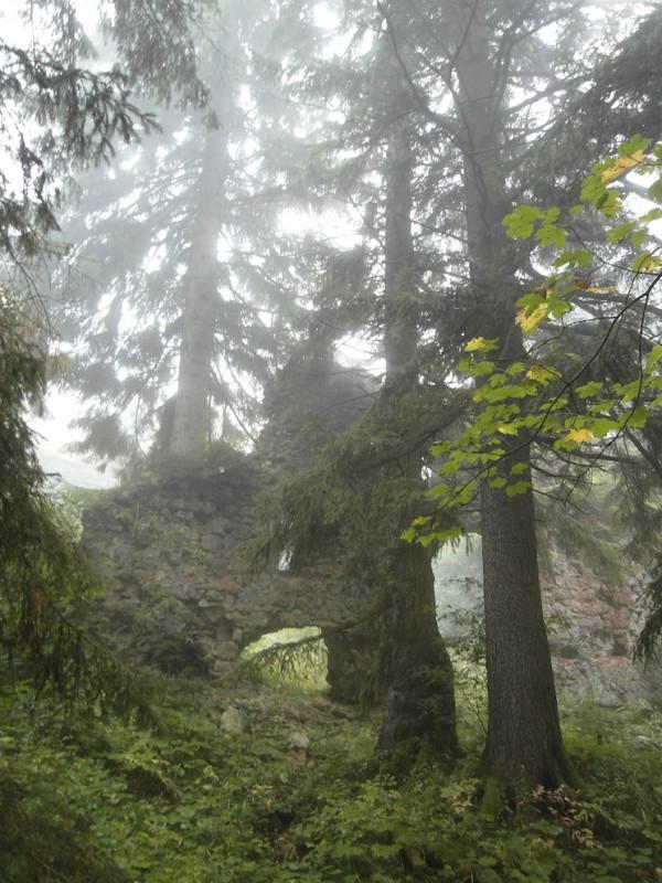 Nesselburg – naturOrte.de