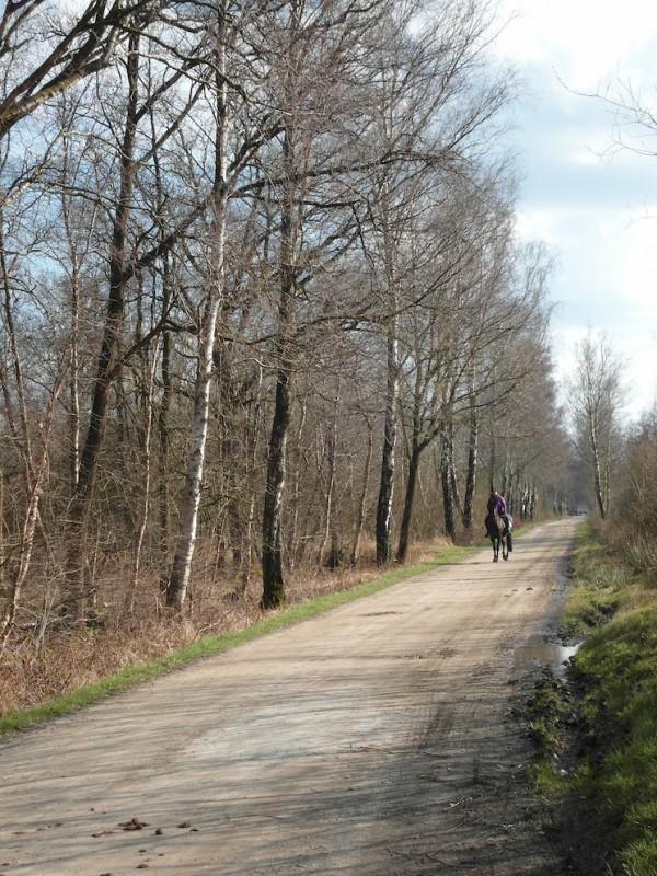Emsdettener Venn – Hindenburgweg - naturOrte.de