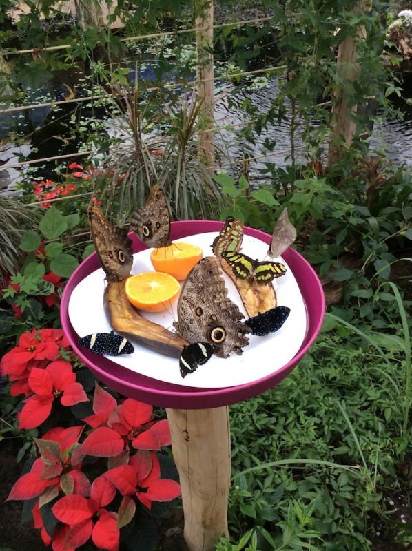 Erlebnispark Emsflower - Schmetterlinge - naturOrte.de