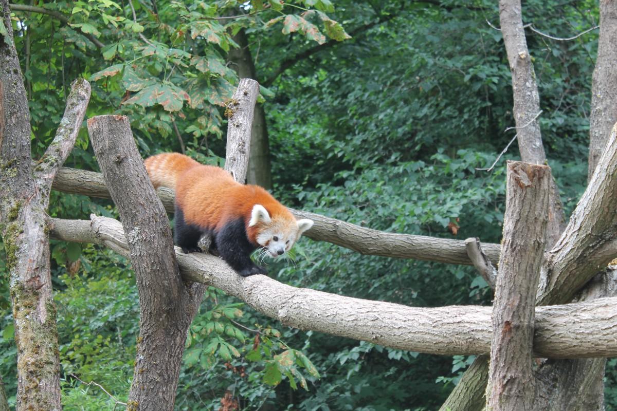 Zoo Karlsruhe Tiere