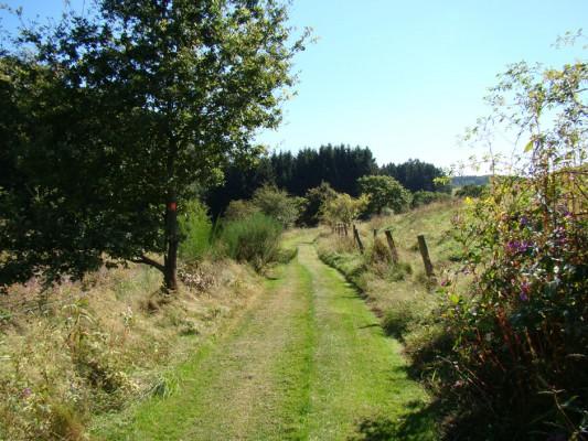 Waldmythenweg Waldbröl: NaturOrt und Familienwanderung