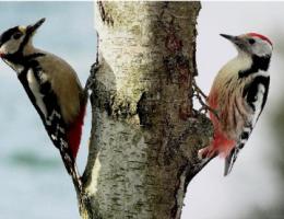 Vogelkunde im Geithewald Hamm, Westfahlen