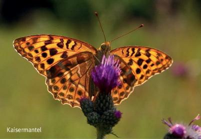 Vögel und Schmetterlinge im Geithewald Hamm, Westfahlen