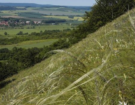 Geopfad Südkyffhäuser, Federgras / NaturOrte