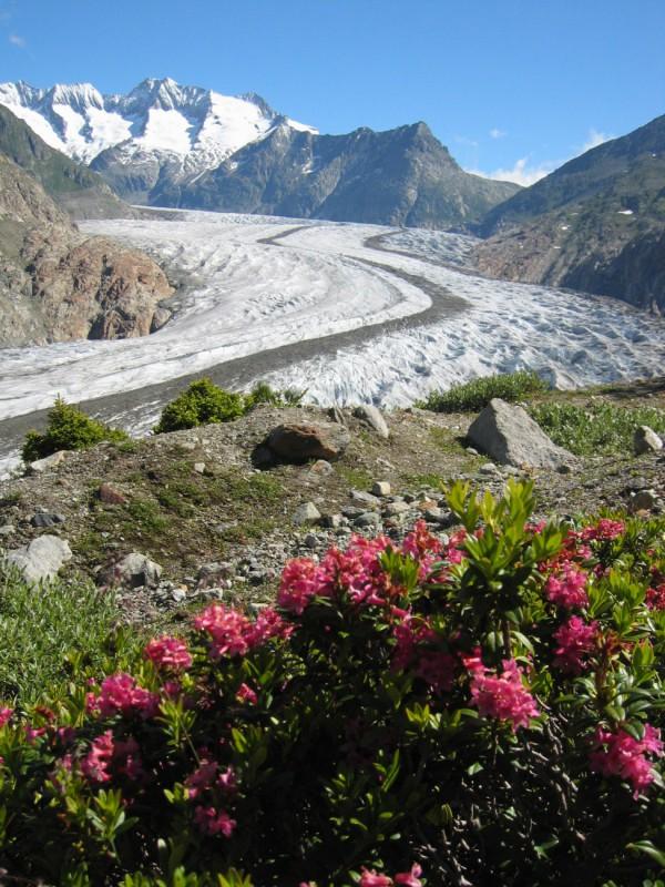 pro-natura-zentrum aletsch-gletscher / NaturOrte