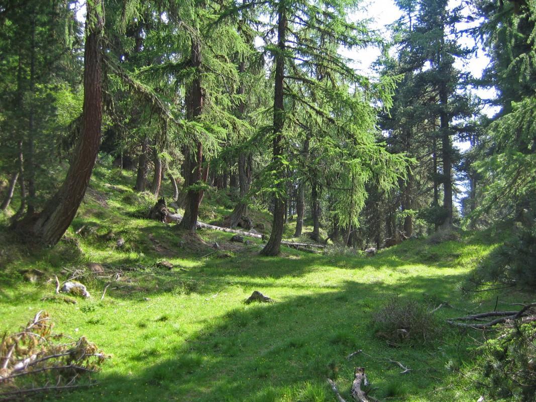pro-natura-zentrum aletsch-gletscher, Auwald / NaturOrte