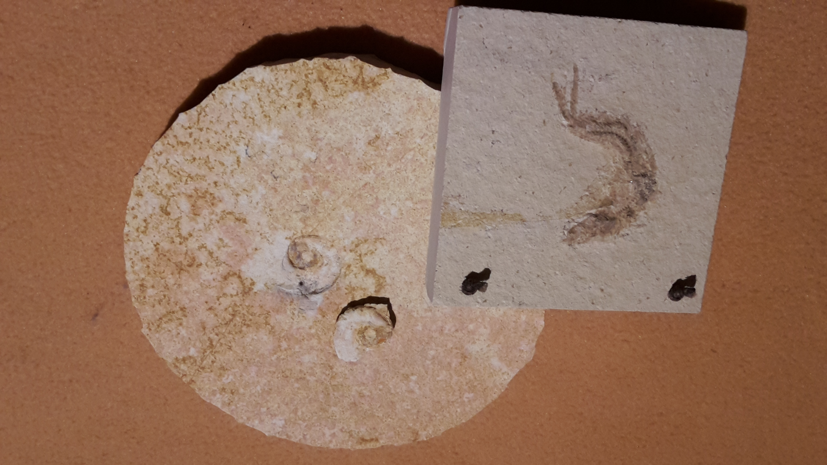Fossiliensteinbruch Blumenberg im Altmühltal