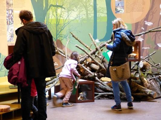 Wildkatzenwelt Stromberg: außerschulischer Lernort und Erlebniswelt