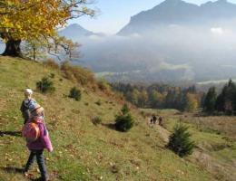 Drei Linden bei Brannenburg - naturOrte.de